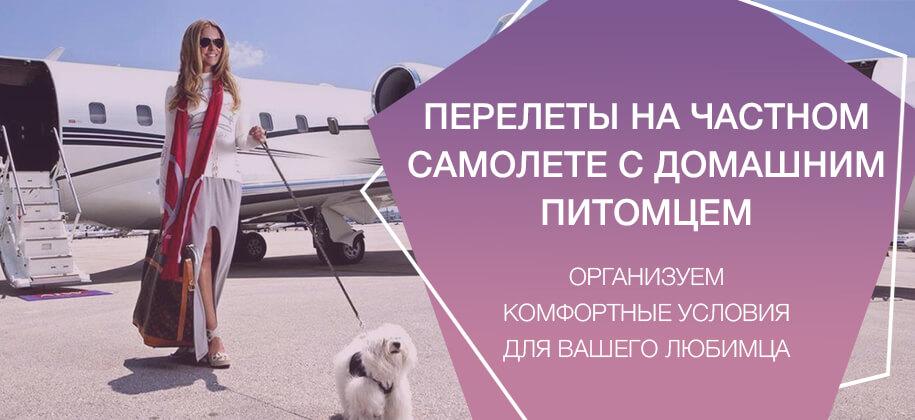 полет на частном самолете с собакой