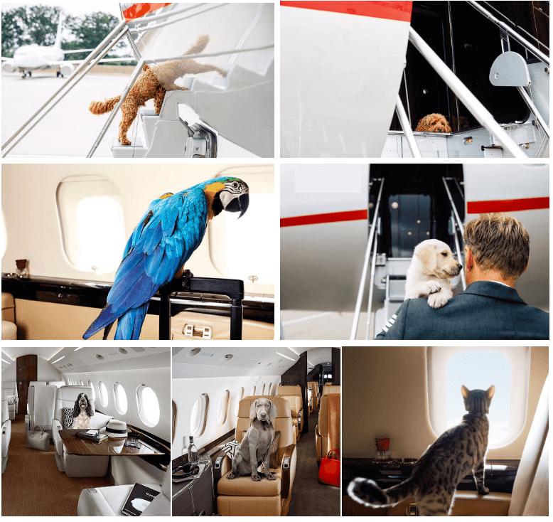 полет на частном самолете с собакой или кошкой