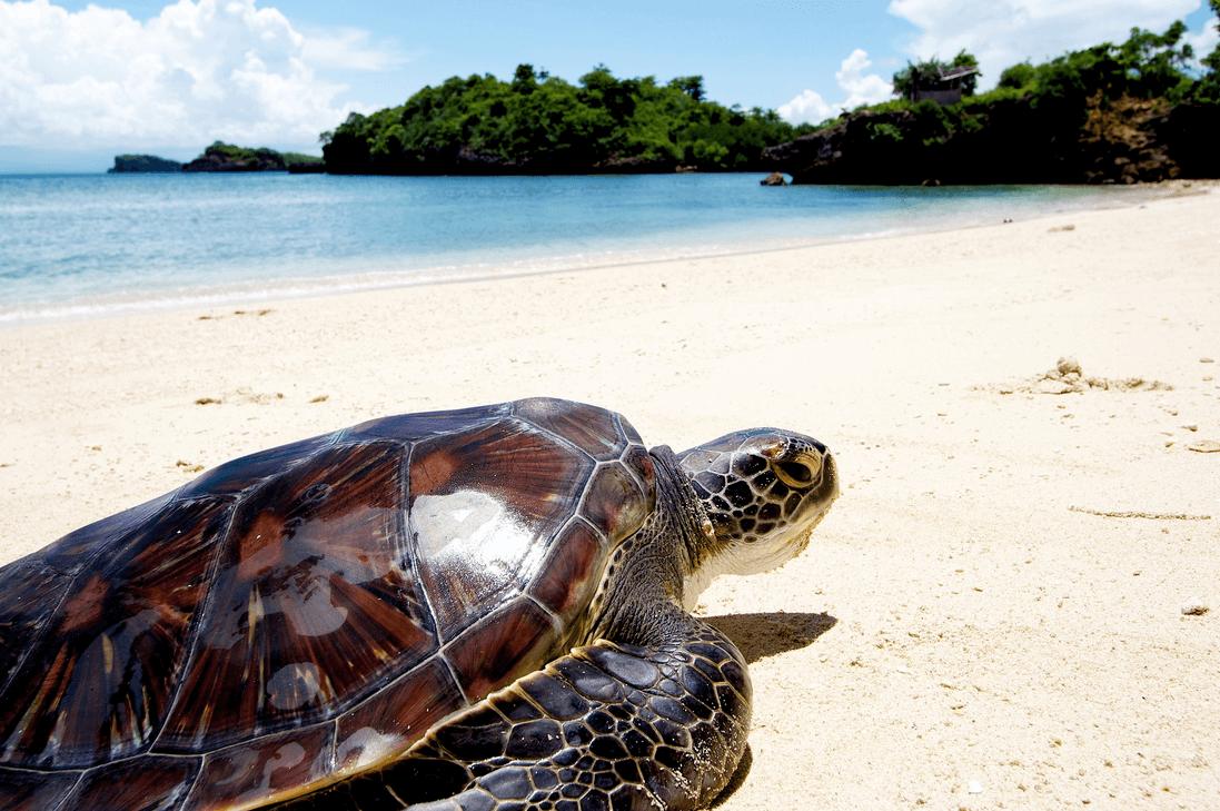 перелет бизнес джетом на фиджи Turtle Island